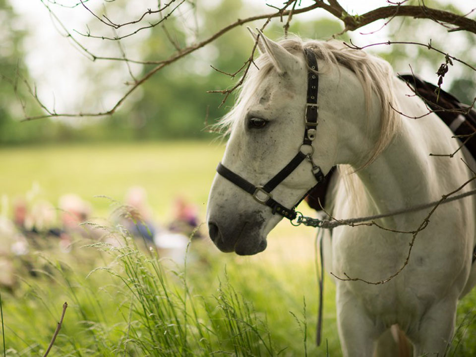 Marktforschung Pferdetourismus